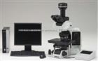 olympus 全电动智能生物显微镜BX63生物显微镜BX63