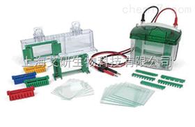 美国伯乐Mini-PROTEAN Tetra小型垂直电泳槽货号1658001