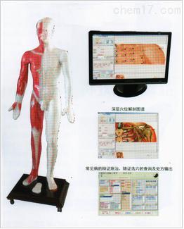 光电感应多媒体人体针灸穴位发光模型