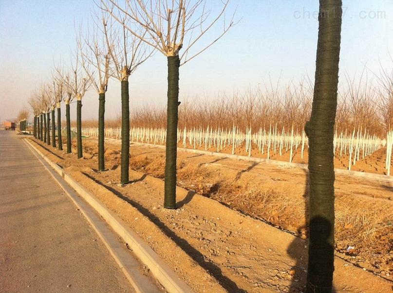 天津树木养护毛毡 树木保温绷带厂家