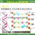 DNA抽提和纯化