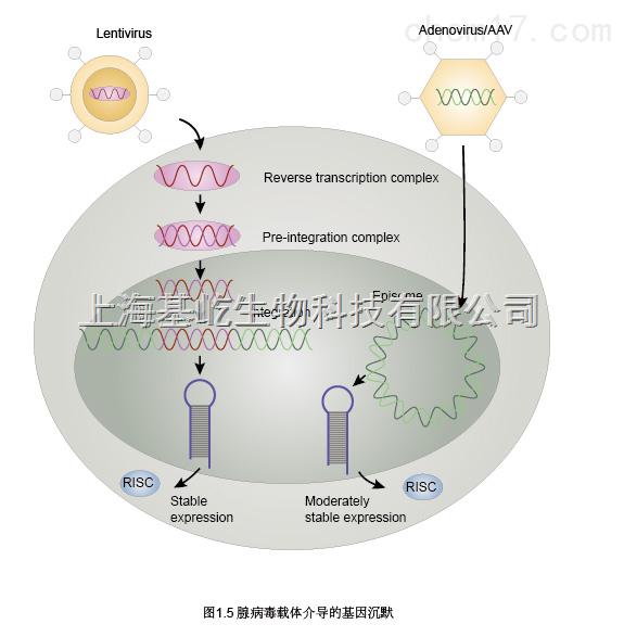 RNA抽提