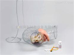 TKMX/D1高级透明男性导尿模型