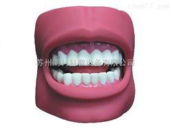 TK/K4牙护理保健模型(带脸颊,自然大)