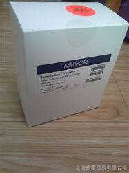 发光底物HRP(ECL发光剂)生物试剂