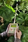 植物冠层分析
