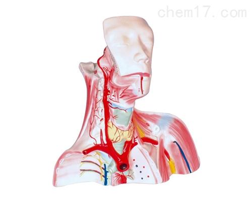 颅腔及头颈胸局部解剖