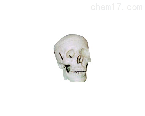 学生用头颅骨模型(二部分)