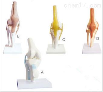 膝关节模型  教学模型