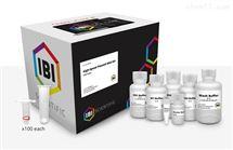 IB47101快速質粒提取試劑盒