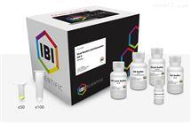 IB47401病毒核酸提取試劑盒