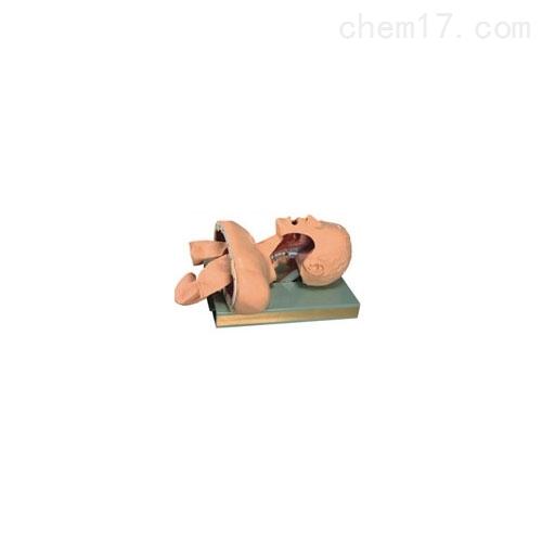 高级气管插管训练模型(带咽喉解剖)
