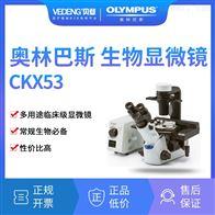 CKX53OLYMPUS奥林巴斯生物倒置显微镜