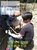 便宜羊用B超价格特价母羊B超今日报价