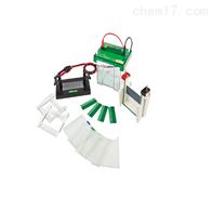 JY-SCZ2+垂直电泳槽