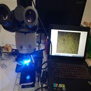 CX23荧光显微镜