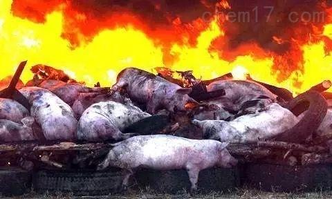 非洲猪瘟快速诊断系统
