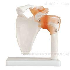 自然大肩关节带韧带骨骼模型