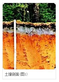 从地面垂直向下至母质的土壤纵截面称为 土壤