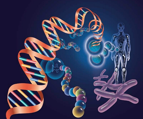 基因疗法修复眼睛的受损细胞同时调整大脑处理新信息,这真是一箭双雕.
