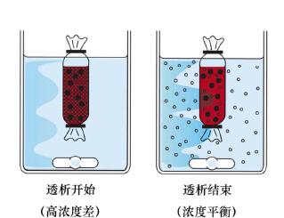 选择合适的截留分子量_透析膜,透析袋,优高玖_解决方案_中国化工仪器网