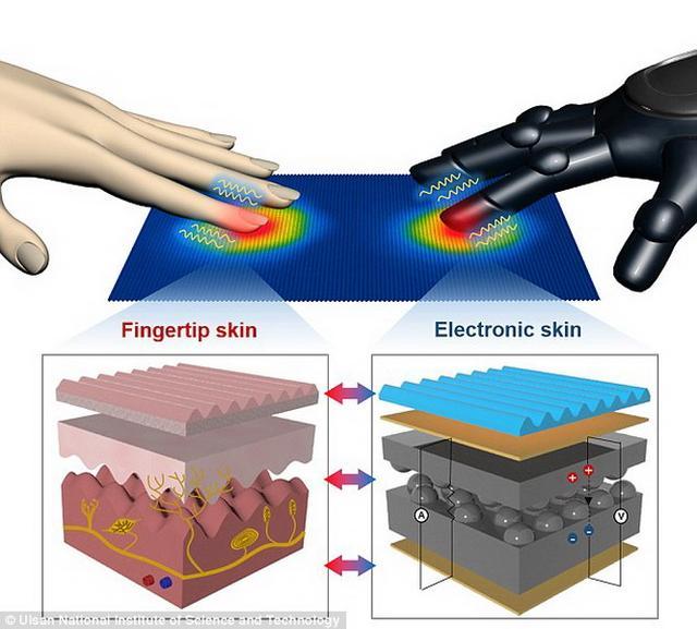 皮肤过敏微观结构图片