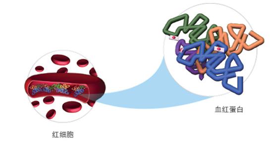 专家共议中国糖化血红蛋白检测标准化与一致性
