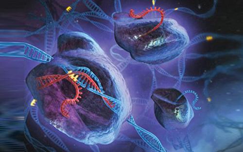 细胞免疫荧光染色步骤