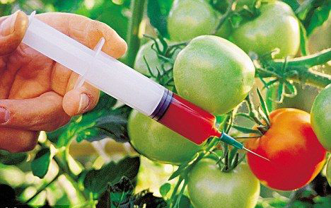 中国 转基因食品/(图片源于百度图片)