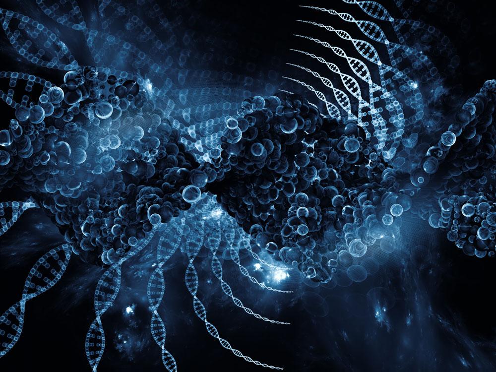 大脑的几何空间结构