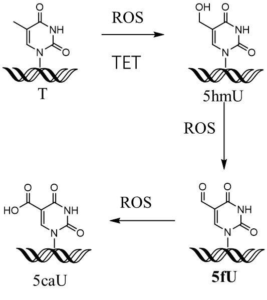 醛基结构式和结构简式