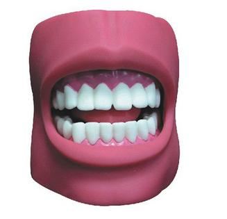 医博牙齿护理保健模型(带脸颊)(自然大)