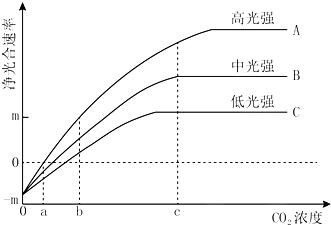 光合速率测定仪