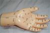 针灸模型|手部按摩模型