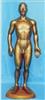 人体针灸模型|全皮肤铜色人体针灸模型(68CM)
