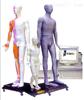 人体针灸穴位发光模型