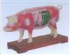 猪体针灸模型