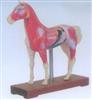 销售马体针灸模型