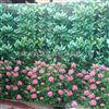 吉林城市绿篱印花防寒布供应商