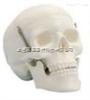 SMD007学生用头颅骨模型(三部件)