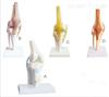 SMD022膝关节模型  教学模型