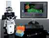 nanowizard 4xp生物型生物原子力顯微鏡